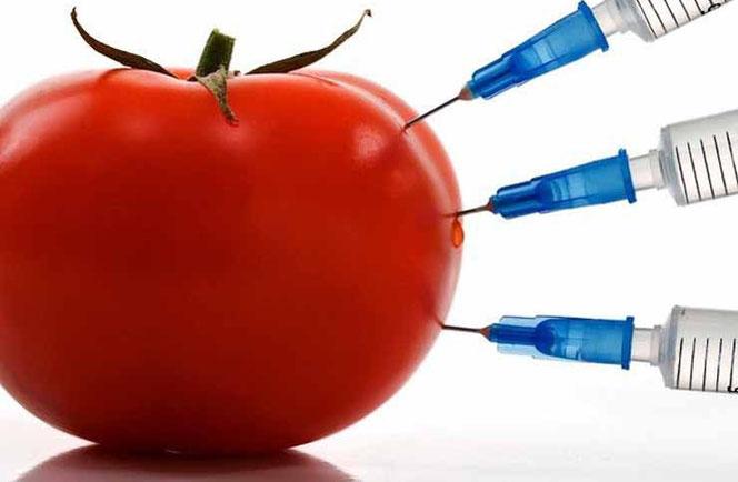 Что такое ГМО
