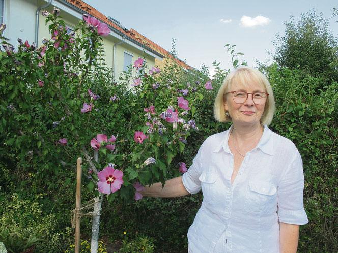 Die Malve gehört zur kleinen Pflanzensammlung, die Ingold Kühne mit ihrer Tätigkeit im BVV-Büro verbindet.