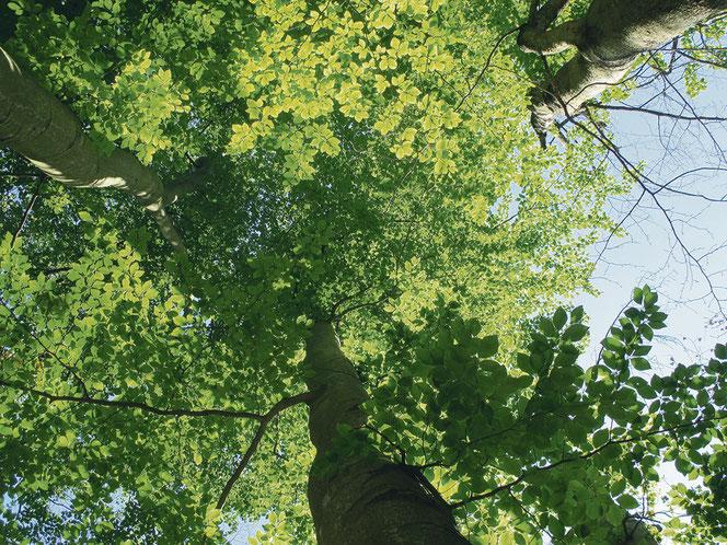 Im Schlosspark wachsen u. a. Buchen, Ahorn, Eichen, Ulmen, Linden, Fichten, Ginkgo und ein Urweltmammutbaum.