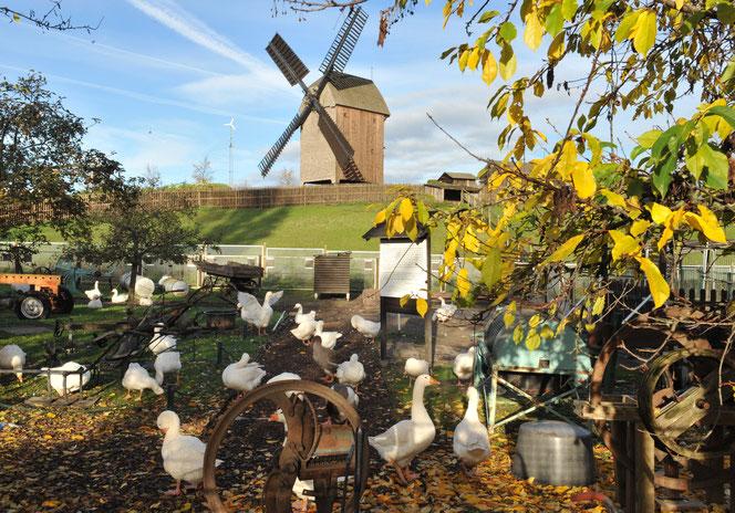 Bockwindmühle Marzahn, © pressefoto-uhlemann.de