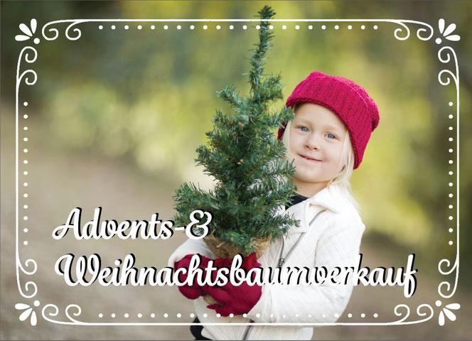 Advent Weihnachtsbaum Sutthausen Osnabrück