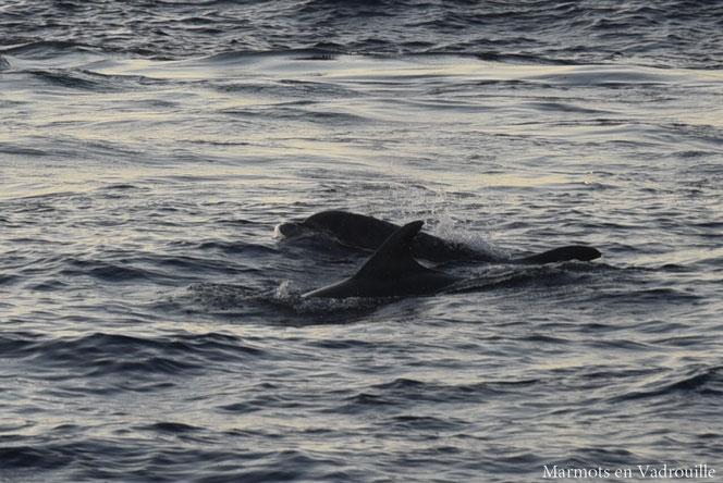 Rencontre avec des dauphines à Majorque