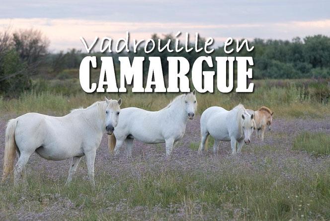 ed88539bab0b Pour nos vacances de Pâques 2016, nos premières vacances à 5, direction les  Bouches du Rhône et plus particulièrement, la Camargue !