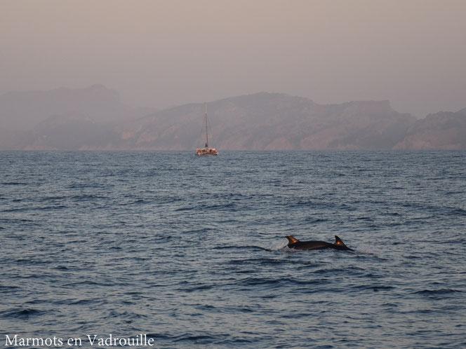 Dauphins Majorque