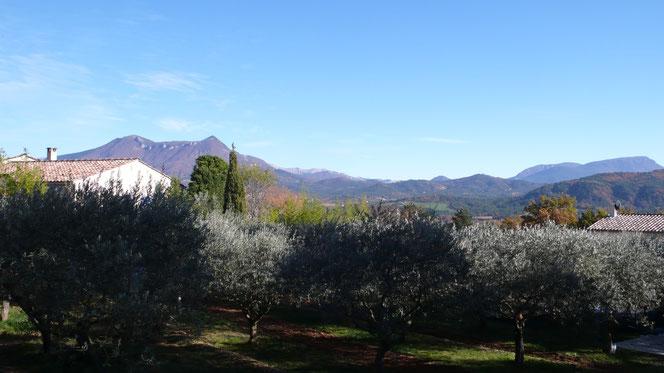 Aiglun, Oliviers, Alpes de Hautes Provence