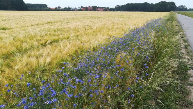 Schöne Spaziergänge in der Region Mittelweser