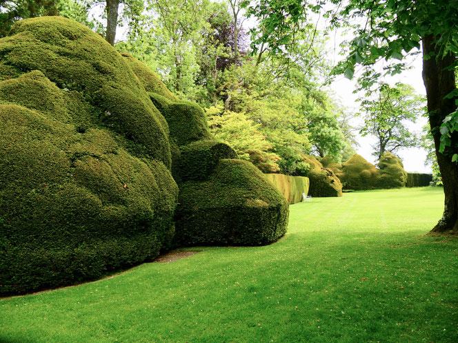 Gartenreise England Sehenswürdigkeiten Dottington Place and Gardens Eibenhecken