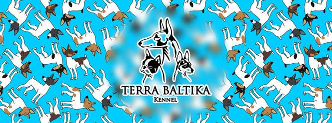 toy fox terrier, Terra Baltika, terra baltika, amertoy, American toy fox terrier, kennel toy fox terrier, puppies toy fox terrier, puppy toy fox terrier, yana bruk