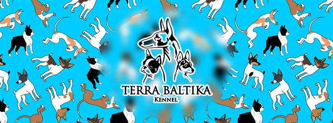 американский той фокстерьер, яна брук, амертой, той фокстерьер, поденко ибиценко, ибицкая борзая, terra baltika, toy fox terrier, podenco ibicenco, ibizan hound