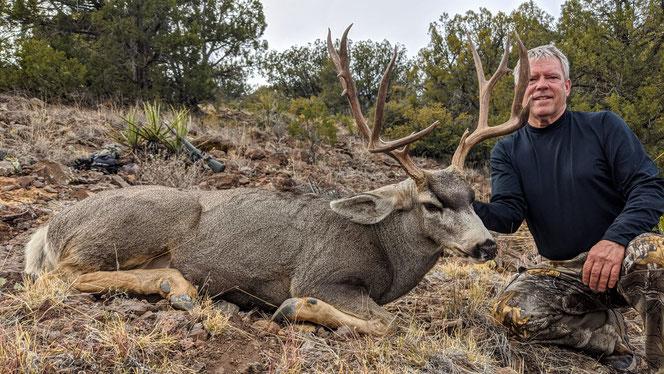 Gila Mule Deer