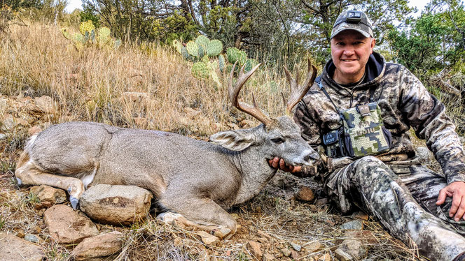 Gila Coues Deer