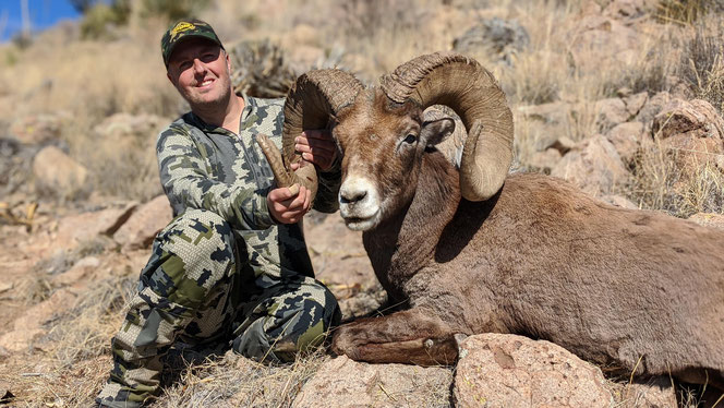 Rocky Mountain Bighorn Sheep Boone and Crockett Club
