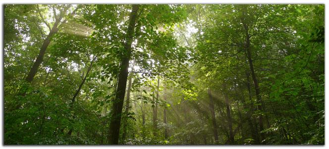Waldbestattung mit Ascheverstreuung
