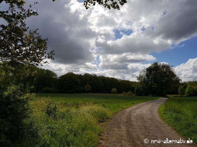 Hübsches Panorama zwischen Wäldern und Wiesen: Der Rundwanderweg R20b bei Billerbeck