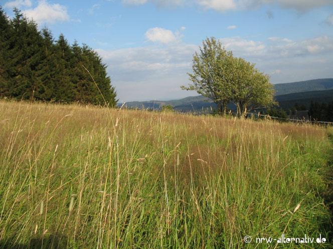 Wiese mit Gras am Hang in Winterberg.