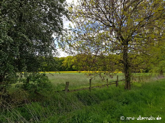 Bild von alten Bäumen und Holzzaun auf dem Wanderweg des WHB.