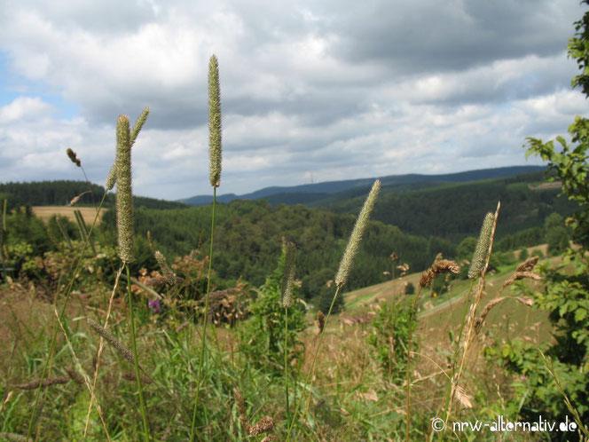 Grashalme vor Hügellandschaft in WInterberg