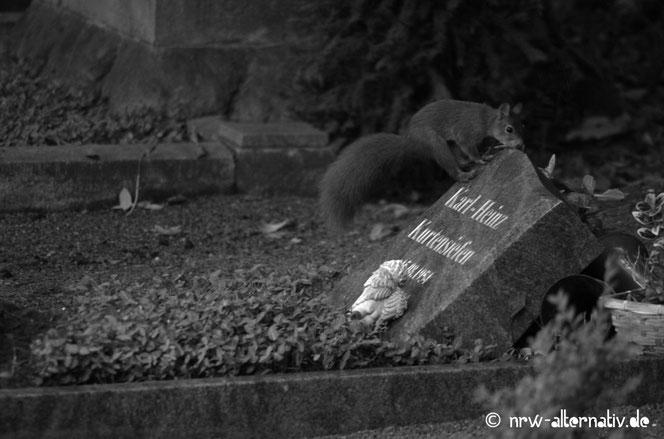 Bild von einem Eichhörnchen auf einem Grabstein.