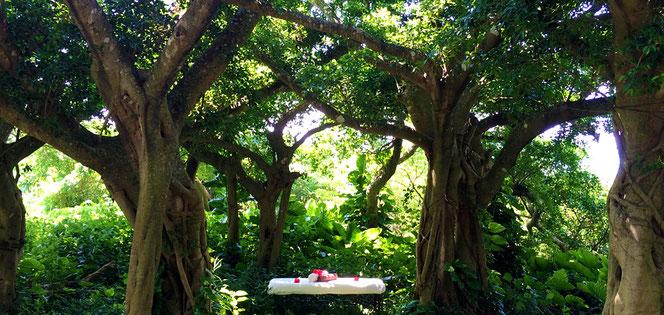 西表島の自然のエナジーと癒しスパのイメージ