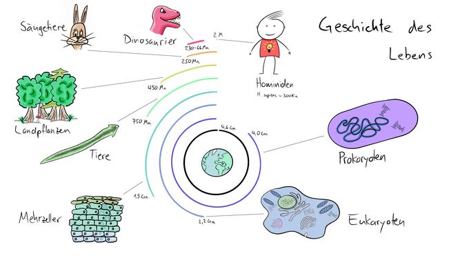 Tafelbild welches die Geschichte des Lebens sowie die wichtigsten Schritte der Evolution visualisiert.