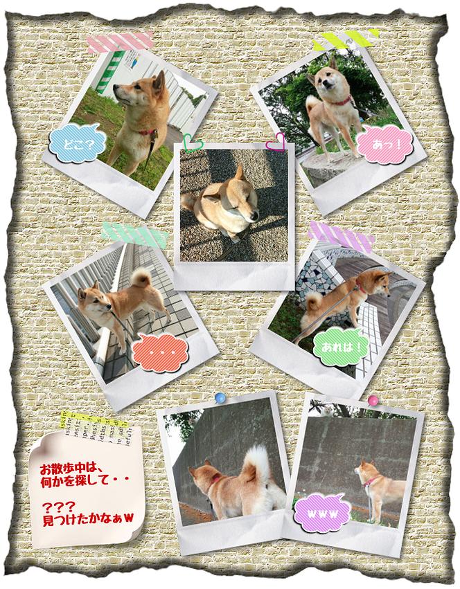 お世話している愛犬画像。さくらちゃん。