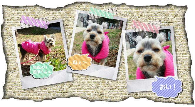 お世話している愛犬画像。クロちゃん。