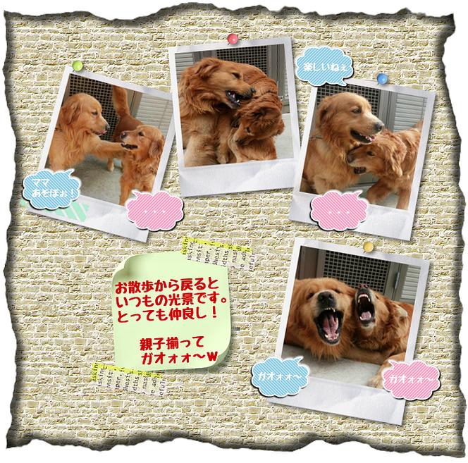お世話している愛犬画像。ポッキーちゃんと鹿丸ちゃん親子。