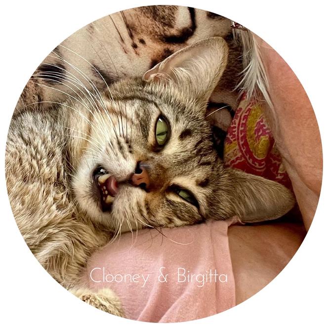 Kater Clooney leidet an Katzenschnupfen (chronisch), seit er vier Wochen alt ist