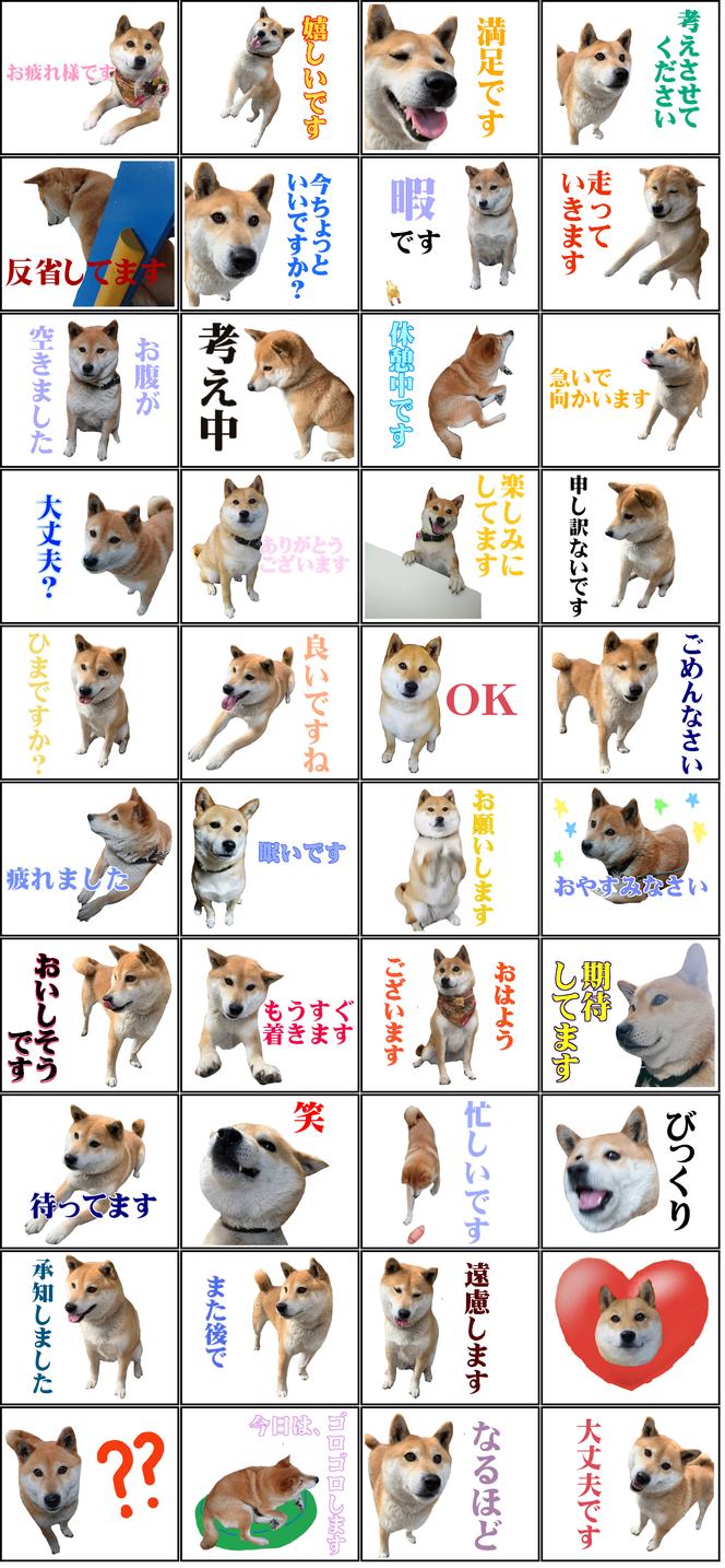 豆柴 柴犬 犬 いぬ イヌ ロンちゃん line スタンプ 日常会話 敬語
