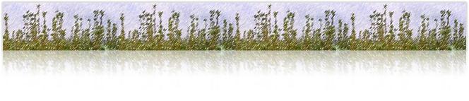 初台・幡ヶ谷近郊の西洋式整体 KOSカイロプラクティック初台オフィスイメージ写真1