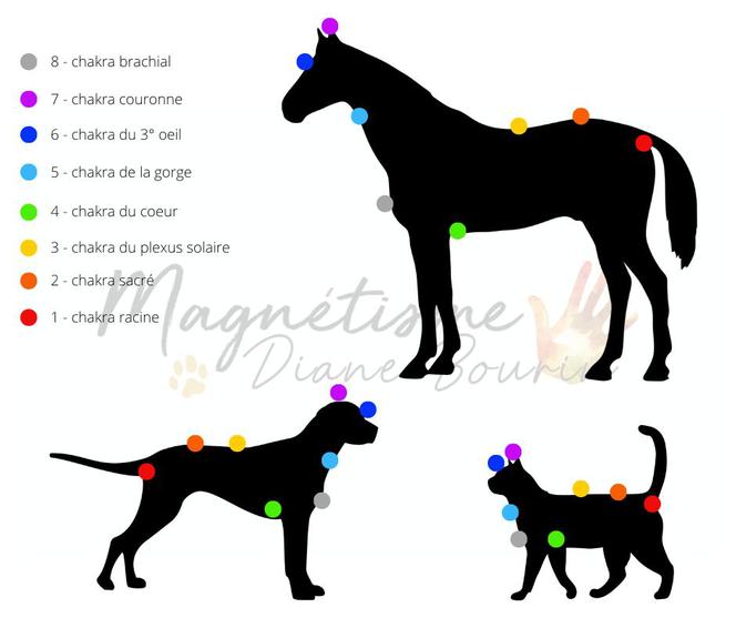Schéma des chakras des animaux. Chakras du cheval, chakras du chien et chakras du chat.