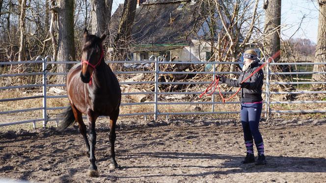 Foto: Raimund Kniffki/Horse-Human-Harmonie 03/18 - Cenzie wendet sich ab. Sie zeigt deutlich das es ihr zuviel ist.