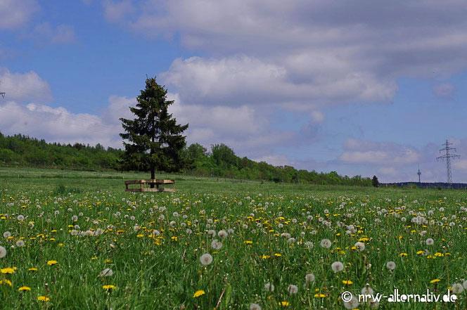 Baum Blumen Ruhrtalradweg Erlebnis bericht