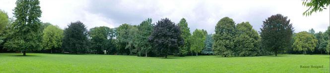 Sommer-Aspekt,  Panorama-Foto Rainer Bongard