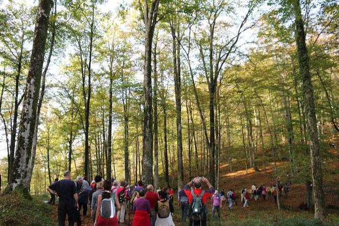Randonnée pédagogique en forêt du Bager d'Oloron 18 juillet 2021 avec l'association ACCOB à Oloron