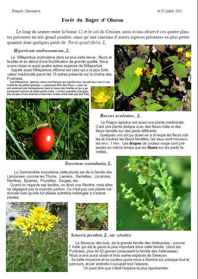 Quelques plantes intéressantes relevées dans la forêt du Bager d'Oloron-François Masonnave