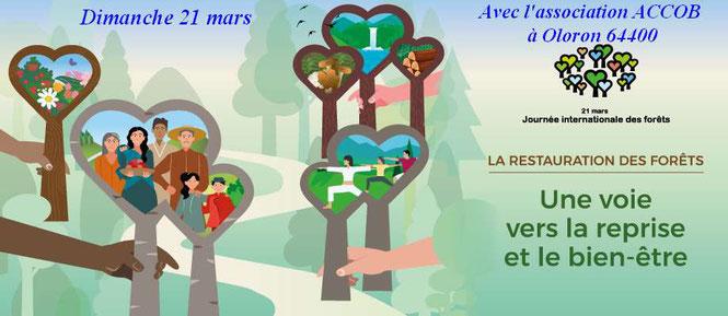 Dimanche 21 mars, tous en forêt avec l'association de sauvegarde de la biodiversité d'Oloron : ACCOB - 9h30 à la Borne 12 dans la forêt du Bager d'Oloron - 64400 - Journée internationale des forêts.