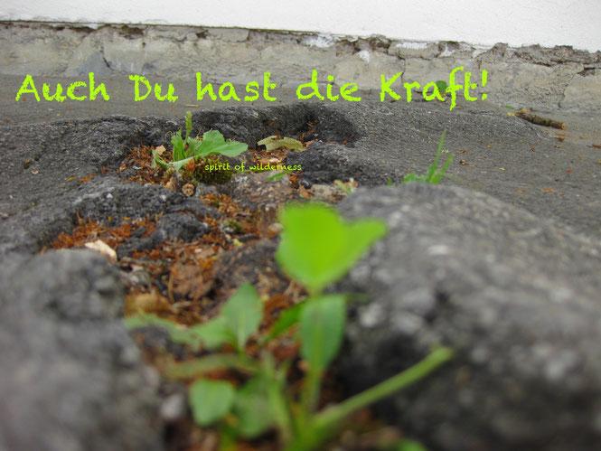 """Pflanzen, die mit aller Kraft durch eine Asphaltdecke hindurch brechen. ein Text auf dem Bild sagt""""auch du hast die Kraft!"""""""