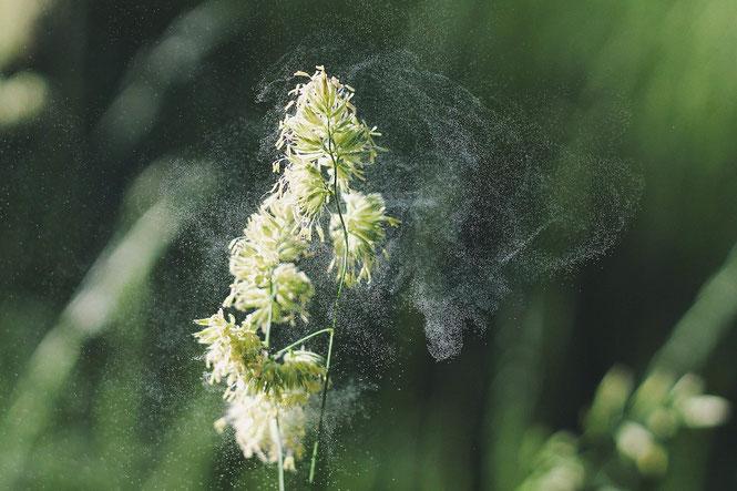 Pollen reizen die Augen