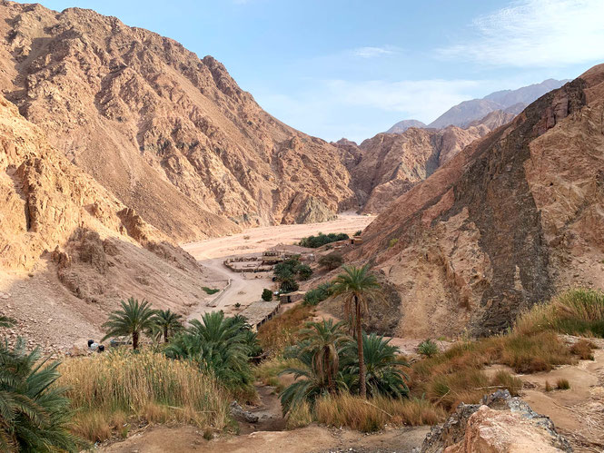 an oasis in the dahab desert