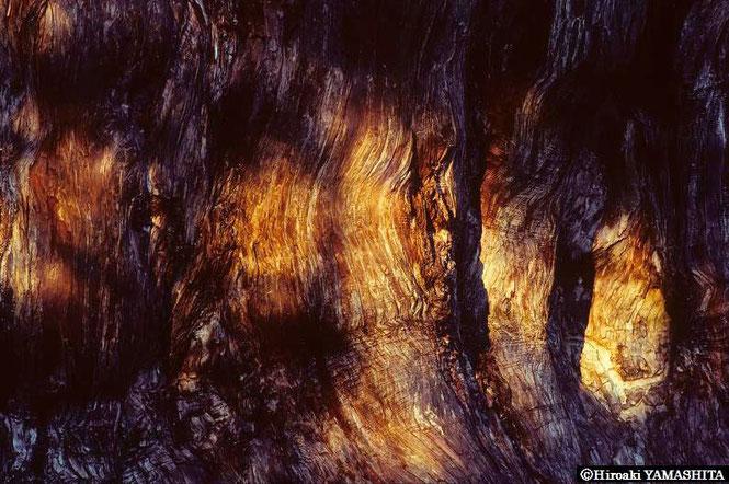 山下大明写真集「樹よ。」より