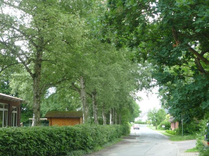 Die Birken vor der Steinhauser Schule wurden nach dem Krieg von Schulkindern gepflanzt.