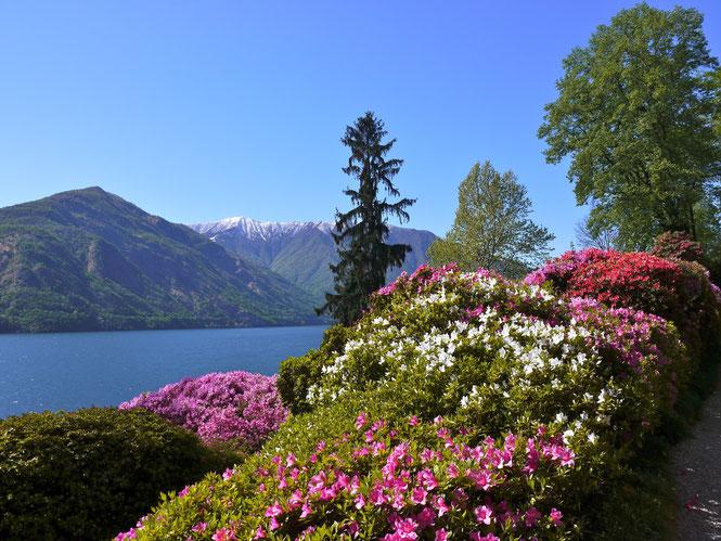 Gartenreise Italen, Villa Carlotta am Comersee