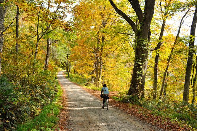 紅葉を愛でる秋の乙見山峠サイクリング(10月中旬ごろ)/長野県と新潟県・県境の峠道