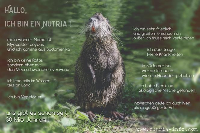 Nutria stellt sich vor - nutria-info.com