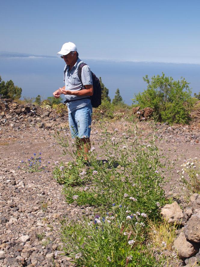 """Wildbiene - Nahrungspflanze - Beobachter: eine faszinierende """"Symbiose"""""""