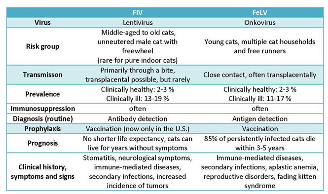Symptoms of FIV and FeLV in cats - Fassisi GmbH