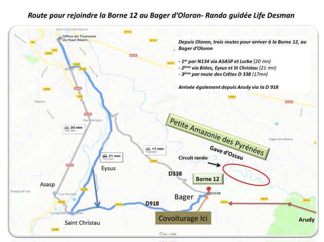 Découvrir le desman des Pyrénées gave d'Ossau et toute la riche  biodiversité en forêt du Bager