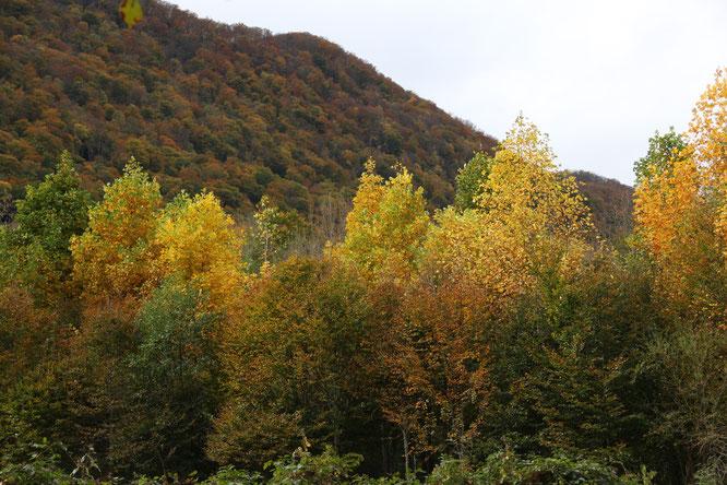 Une partie de la Forêt de Bager d'Oloron Ste Marie - Belle notre forêt !