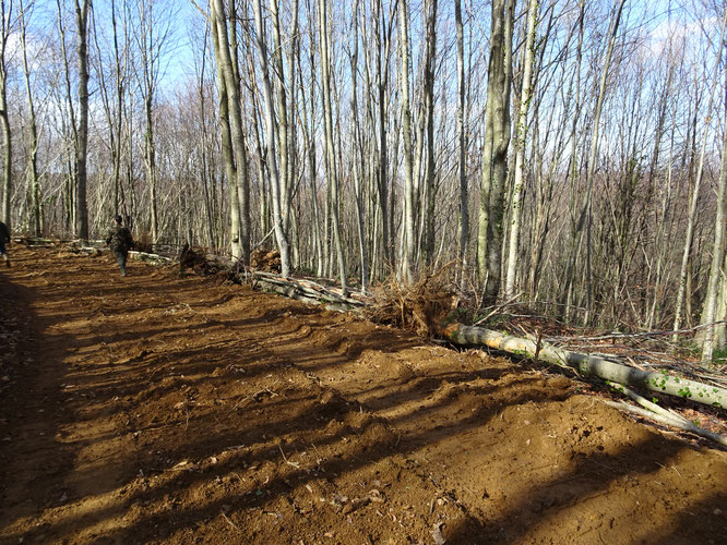 Exploitation sauvage. Des pistes inutiles, des centaines d'arbres détruits au Bager d'Oloron